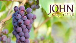 John 15 1-8